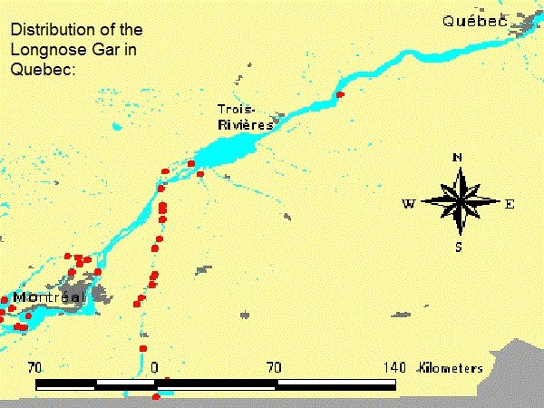 Distribution of the Longnose Gar in Quebec: